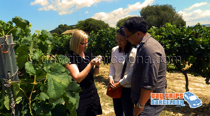 Barcelona Wine Tours - Torres wine tours